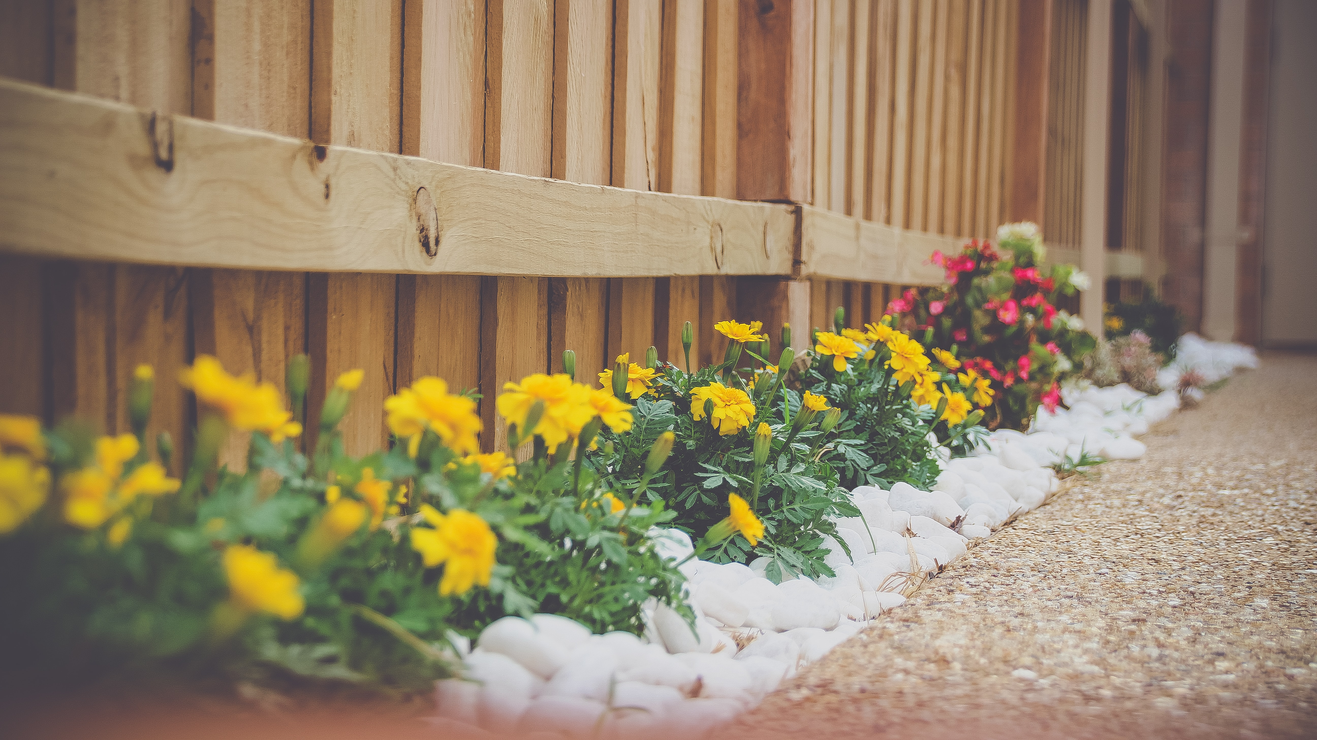 Summer Landscaping Trends