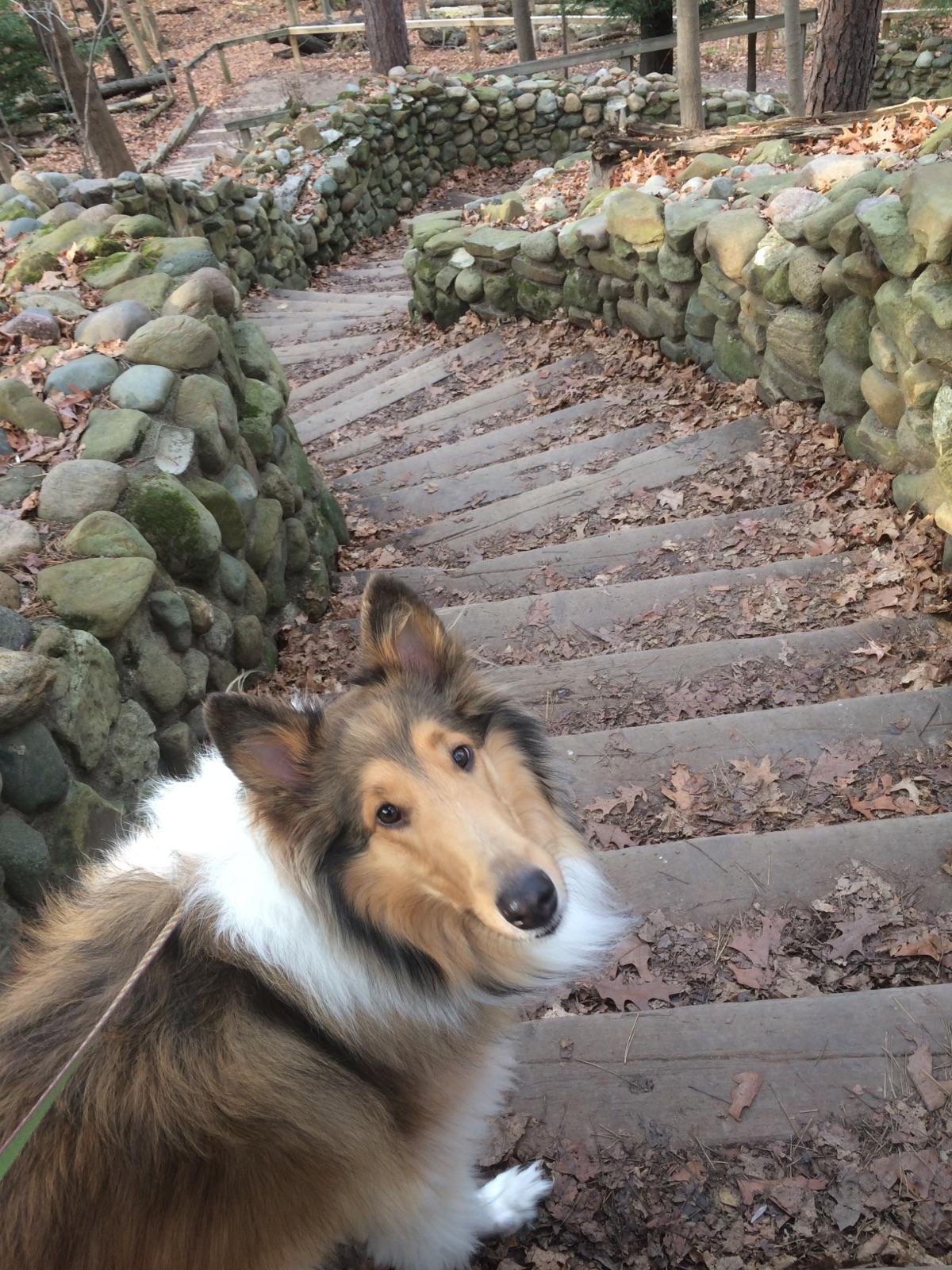 Bea on Steps