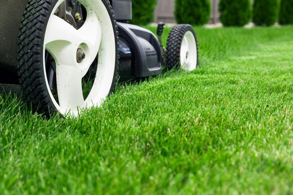Sharp Mower Blades Make Healthy Grass