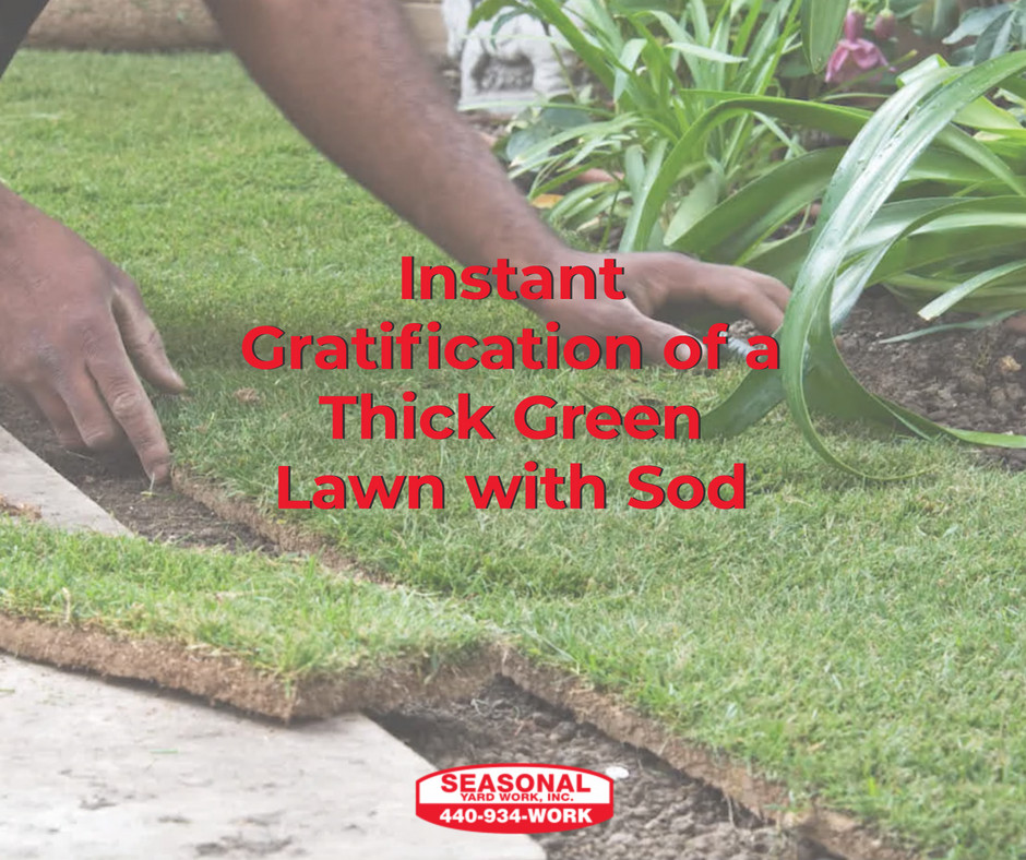 Instant Gratification of a Thick Green Lawn with Sod Image